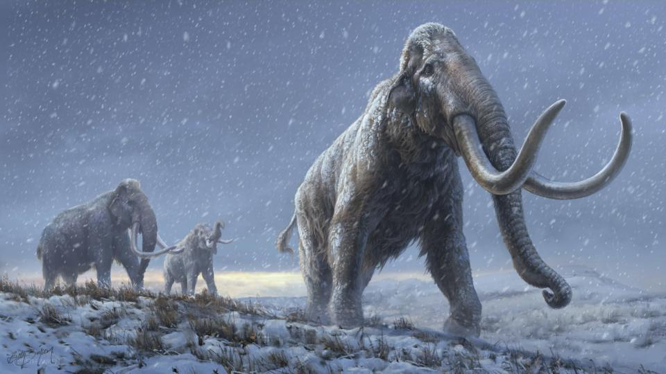 """<span class=""""caption"""">Illustration du mammouth des steppes, ancêtre du mammouth laineux</span> <span class=""""attribution""""><span class=""""source"""">Beth Zaiken/Centre for Palaeogenetics</span>, <span class=""""license"""">Author provided</span></span>"""
