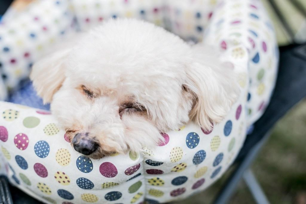 """When a pet becomes depressed, """"their… sleeping habits often change,""""<strong>John Ciribassi, DVM,</strong>former president of the American Veterinary Society of Animal Behavior, told WebMD. Both insomnia and excess sleep can be <a rel=""""nofollow"""" href=""""https://bestlifeonline.com/sick-dog/?utm_source=yahoo-news&utm_medium=feed&utm_campaign=yahoo-feed"""">signs of a miserable dog</a> or cat, so don't hesitate to make an appointment with the vet should your pet exhibit a shift in their sleeping patterns."""