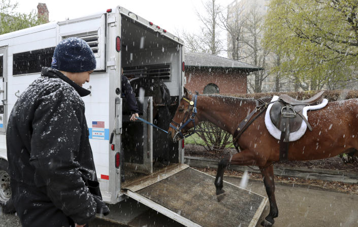 Chicago Police Sgt. Richard Unizycki, watches as a fellow sergeant takes a police horse into a transport trailer at the South Shore Cultural Center as snow falls Saturday, April 27, 2019, in Chicago. Unizycki and other officers were preparing to take their mounted patrol on duty along North Michigan Avenue later in the day. (John J. Kim/Chicago Tribune via AP)