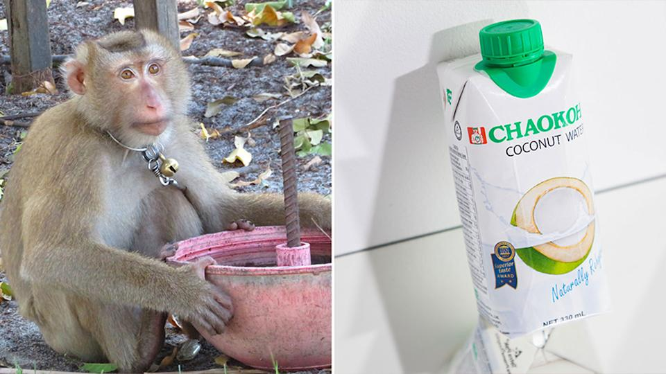 Target discontinues Chaokoh coconut milk for allegations of monkey labor