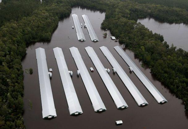 PHOTO: Chicken farm buildings are inundated with floodwater from Hurricane Florence near Trenton, N.C., Sept. 16, 2018. (Steve Helber/AP)