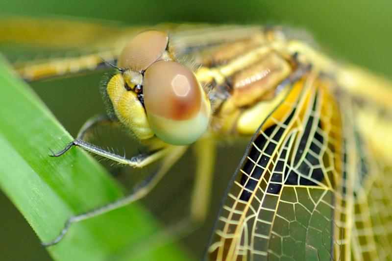 A dragonfly is pictured at a garden in Kathmandu on June 27, 2012. (PRAKASH MATHEMA/AFP/GettyImages)