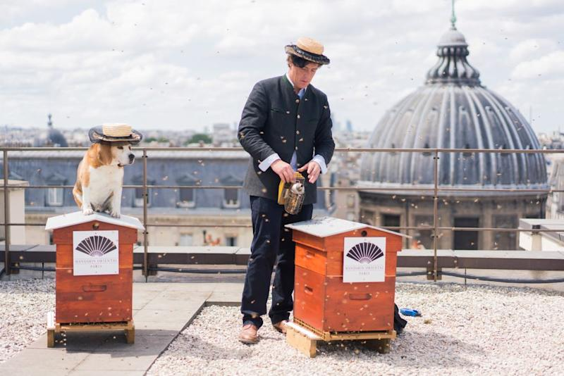This Rooftop Beekeeper Helps the Mandarin Oriental in Paris Stay Eco-Friendly