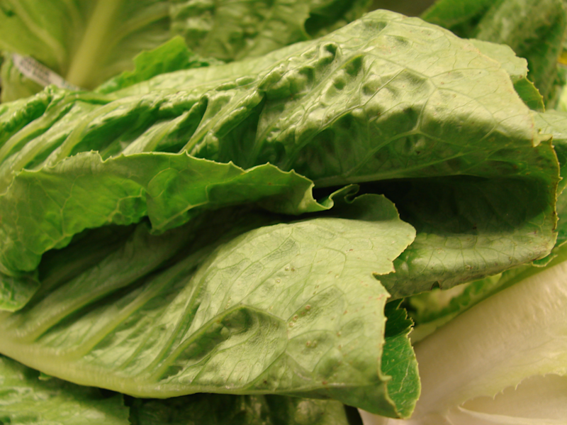 Throw Away Romaine Lettuce — CDC