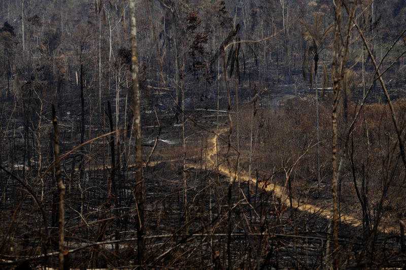 Charred trees stand as a forest fire sweeps through the Vila Nova Samuel region, along the road to the Jacunda National Forest near the city of Porto Velho, Rondonia state, part of Brazil's Amazon, Sunday, Aug. 25, 2019. Experts from the country's satellite monitoring agency say most of the fires are set by farmers or ranchers clearing existing farmland, but the same monitoring agency has reported a sharp increase in deforestation this year as well. (AP Photo/Eraldo Peres)