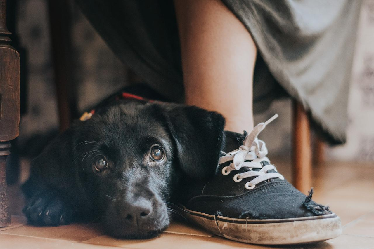 <p>Rescue dog Yzma leans on her owner's foot (Maria Davison) </p>