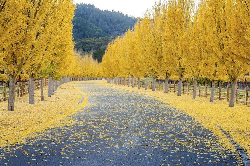 """<p>The trees in <a href=""""https://fave.co/2QdllVl"""" rel=""""nofollow noopener"""" target=""""_blank"""" data-ylk=""""slk:California's Napa Valley"""" class=""""link rapid-noclick-resp"""">California's Napa Valley</a> wave goodbye to warm weather with one last hoorah.</p>"""