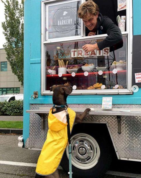 PHOTO: Michal Perlstein said his dog Clio loves visiting the dog food truck and eating her doggy sundaes. (chocolateclio)