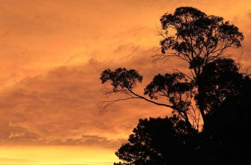 A golden sky on the final days of Spring, as the sun sets with a silhouetted Australian gum tree in Kayena, near Launceston, Tasmania.