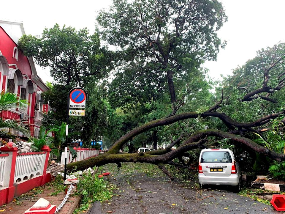 A car damaged by an uprooted tree due to strong winds during the formation of cyclone Tauktae, in Panjim