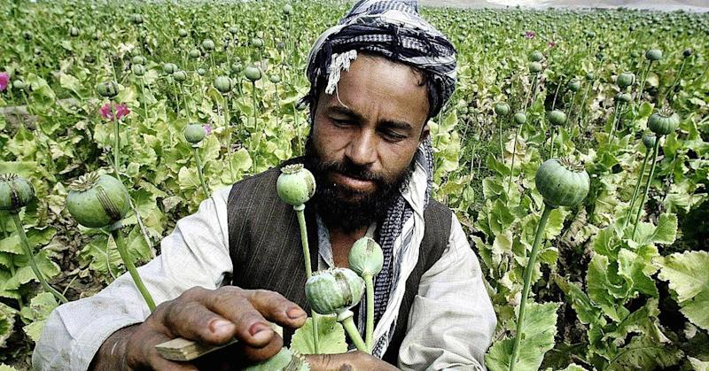 Chinese takeout: Afghanistan's opium problems are growing worse, and it has to do with this