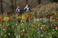 Far fewer visitors than normal are seen at the world-famous Keukenhof garden in Lisse, Netherlands, Friday, April 9, 2021. Finally, after month after bleak month of lockdown, there are springtime shoots of hope emerging for a relaxation of coronavirus restrictions at a Dutch flower garden and other public venues. Keukenhof nestled in the pancake flat bulb fields between Amsterdam and The Hague opened its gates Friday to a lucky 5,000 people who were allowed in only if they could show proof on a smartphone app that they had just tested negative for COVID-19. (AP Photo/Peter Dejong)