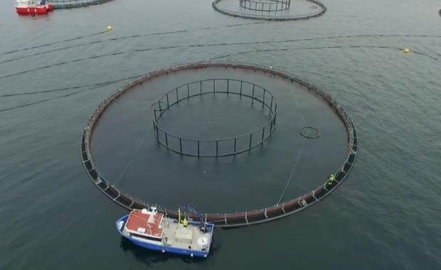 A Norwegian company will develop state-of-the-art ocean sensors that allow open-net pens to be monitored and managed remotely from shore. (Aqua Maof Group/Submitted - image credit)