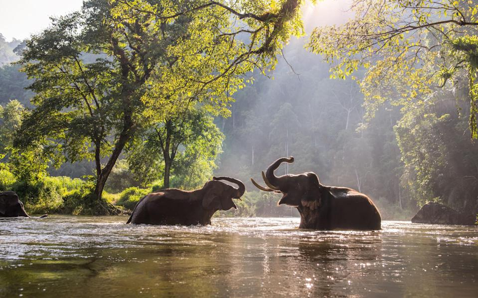 Thailand's elephants are struggling without tourists - getty