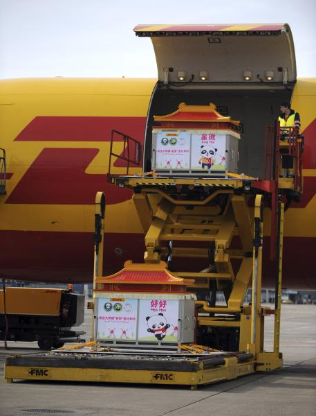 Workers unload a pair of giant pandas upon their arrival at Brussels airport