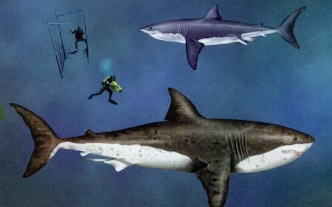 Theories abound about the Megalodon shark - Credit: PA