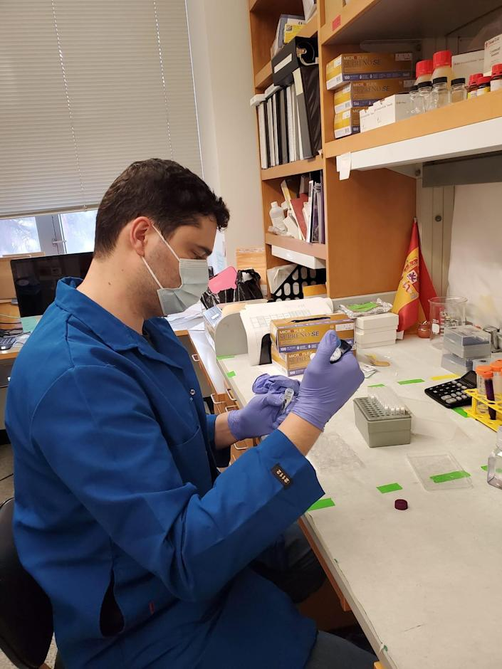 mice study autism viral infection