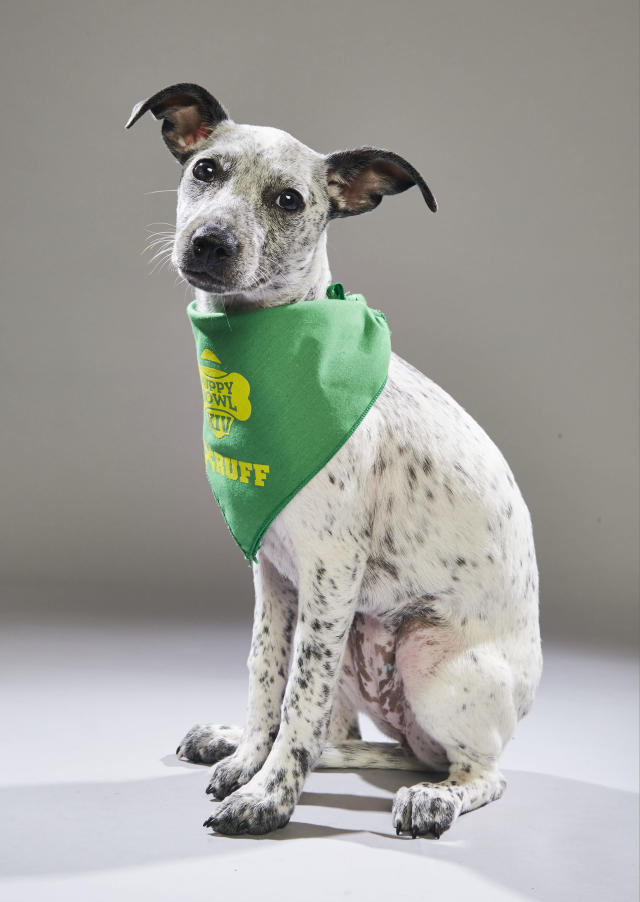 <p>Team: Ruff<br> From: Anti-Cruelty Society of Chicago<br> (Photo: Animal Planet) </p>