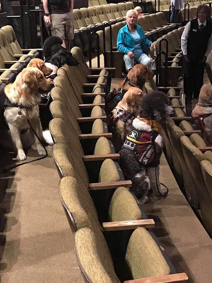 (Photo: K-9 Country Inn Working Service Dogs)