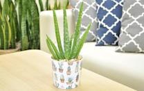 """<p>You can use the <span>Costa Farms Aloe Vera Plant in Modern Ceramic Planter</span> ($25) for so many different things like <a class=""""link rapid-noclick-resp"""" href=""""https://www.popsugar.co.uk/DIY"""" rel=""""nofollow noopener"""" target=""""_blank"""" data-ylk=""""slk:DIY"""">DIY</a> skin and hair care, yummy smoothies, and more.</p>"""