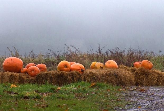 Orange you glad you bought a pumpkin? These farmers say they're sold out