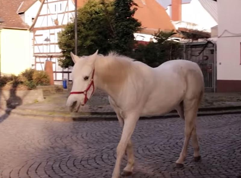 The 22-year-old Arabian appears in healthy condition, perhaps due to her daily walks. Source: YouTube/Equine Stories