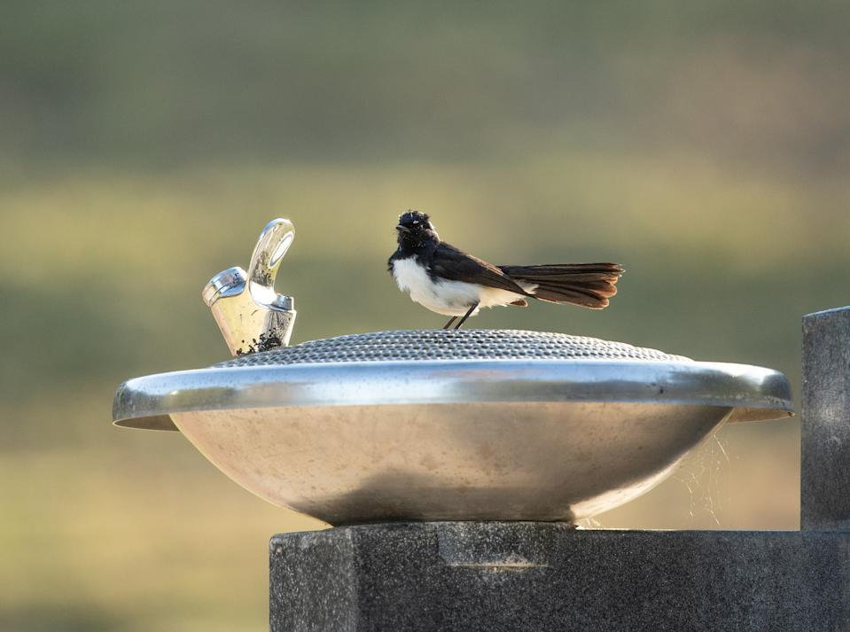 Wildlife will also benefit from having access to clean, fresh, water. Source: Getty