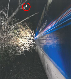 Pictured is the tree Ms Roper struck seconds after placing her head out of the train window. Source: RAIB