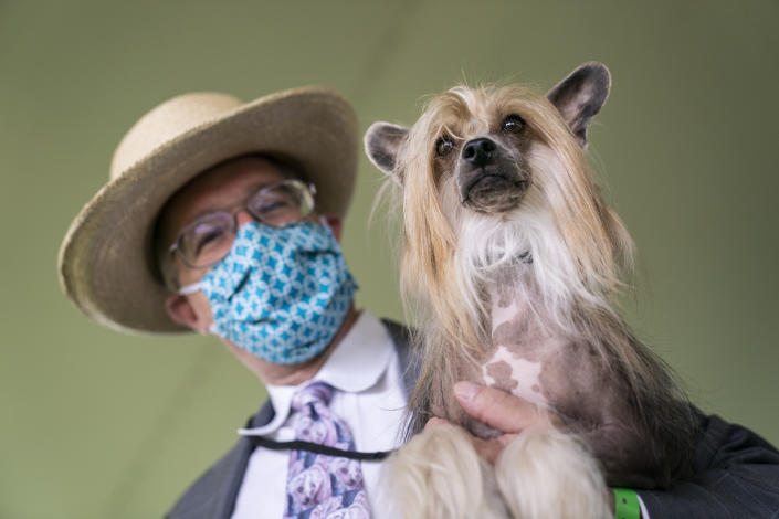 Venom, a Chinese crested dog, participates in breed judging at the 145th Annual Westminster Kennel Club Dog Show, Saturday, June 12, 2021, in Tarrytown, N.Y. (AP Photo/John Minchillo)