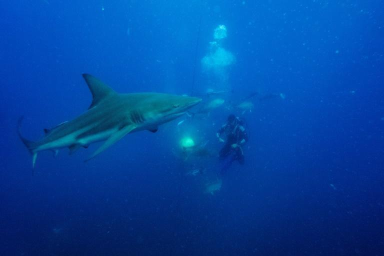 Sharks mostly eat smaller fish and other marine animals, rather than pursuing human swimmers