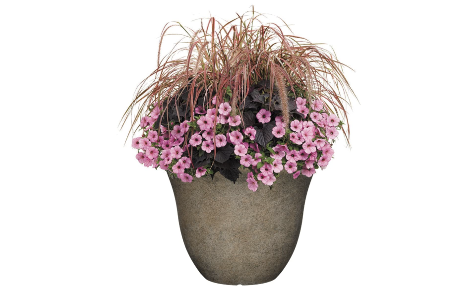 What a cute home for your flowers! (Photo: Amazon)