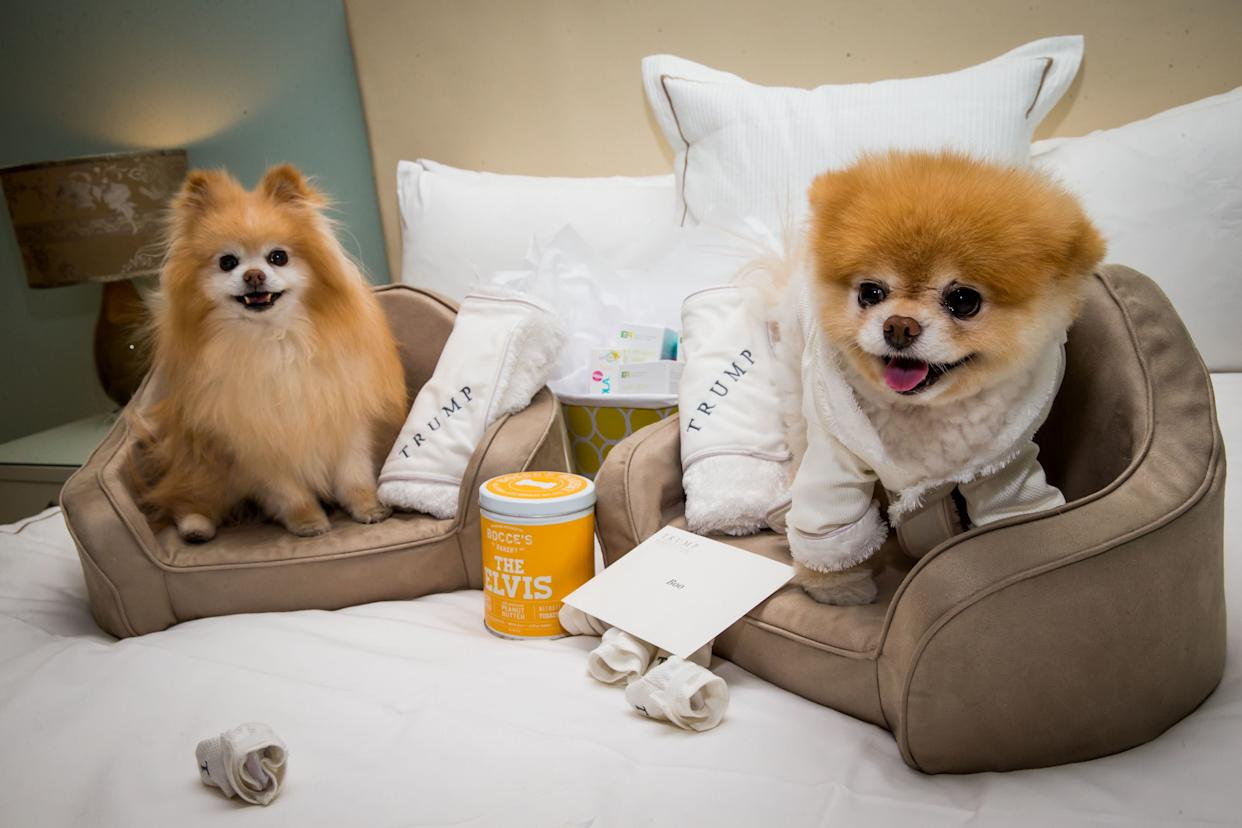 Boo (R) and his best friend, Buddy in 2014 atTrump International Hotel in Las Vegas. Notably, this was before Trump entered politics. (Photo: RTNKabik/MediaPunch/IPx)