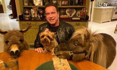 Horse trading: Arnold Schwarzenegger puts Whiskey and Lulu to work