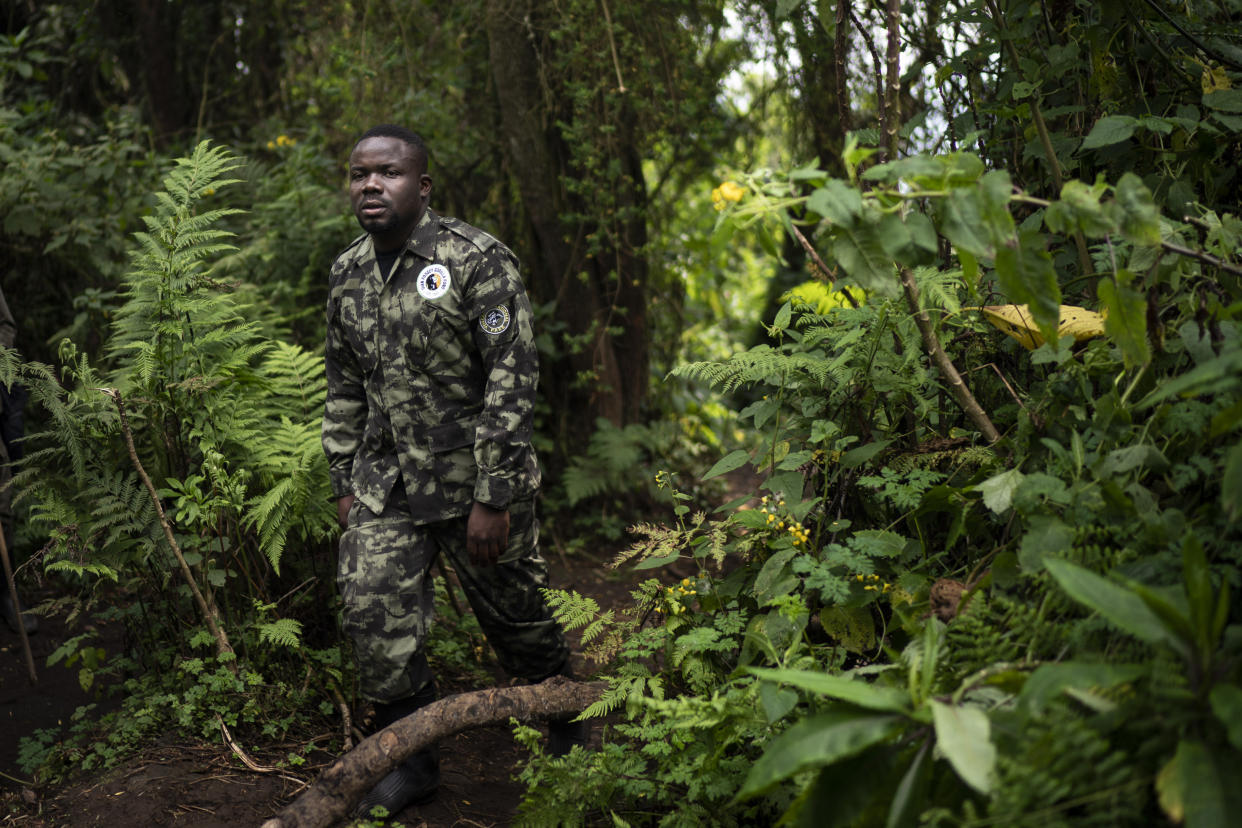 Jean Paul Hirwa walks down a trail to observe mountain gorillas in Volcanoes National Park, Rwanda. (Photo: Felipe Dana/AP)