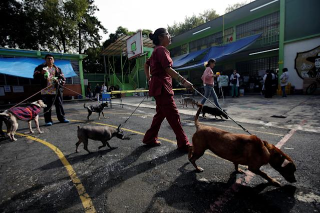 <p>People who live in a school turned shelter as their homes were damaged in an earthquake, walk their dogs in Mexico City, Mexico, Sept. 23, 2017. (Photo: Jose Luis Gonzalez/Reuters) </p>