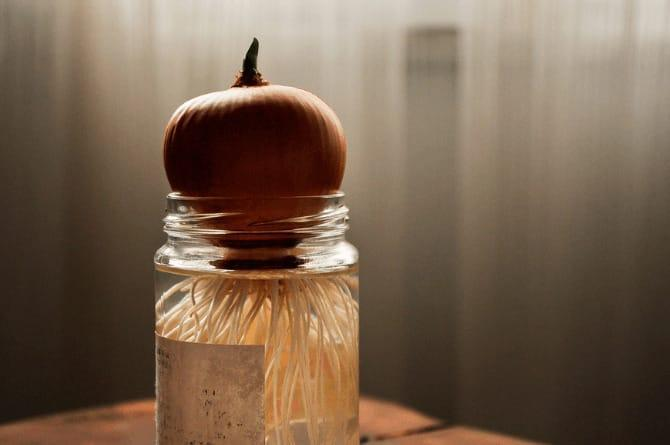 onion in bedroom for cold