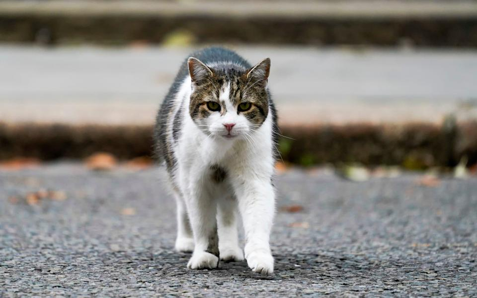 Larry the Cat: Not being sacked today