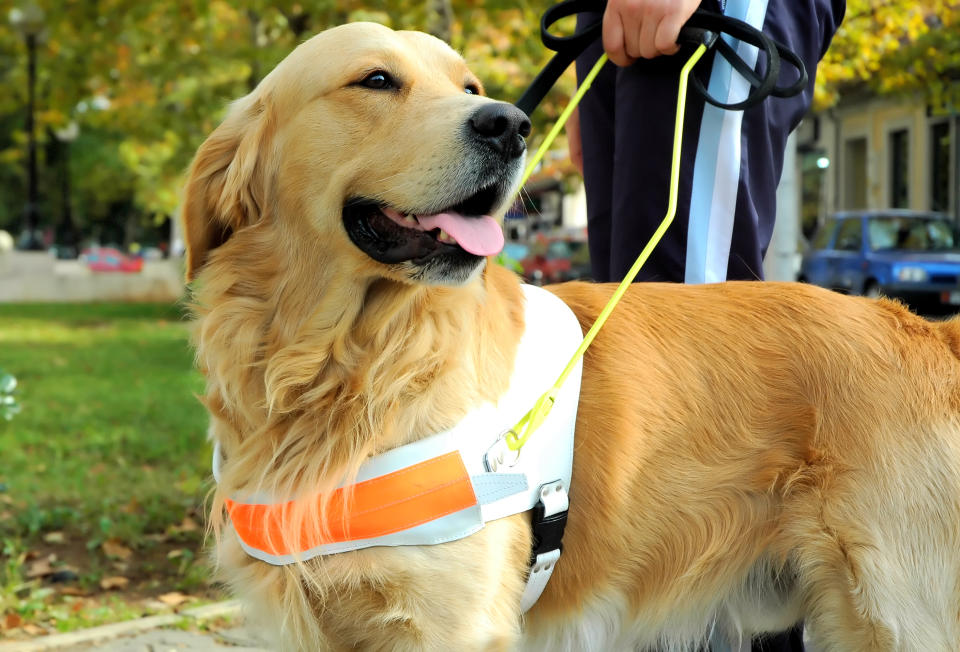 Blind people often need the support of trained dogs. (Getty Images)