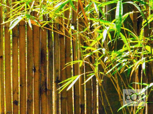 Study says planting bamboo trees can help prevent landslides