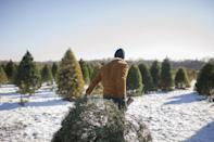 """<p><strong>Montrose, Colorado</strong></p><p>Picking a tree is just the beginning at <strong><a href=""""http://www.coveredbridgeranch.com/"""" rel=""""nofollow noopener"""" target=""""_blank"""" data-ylk=""""slk:Covered Bridge Ranch"""" class=""""link rapid-noclick-resp"""">Covered Bridge Ranch</a></strong>. Breathtaking views, horseback rides, and countless photo opps are available at this beautiful farm. If you want to visit before Santa comes town, you can also go there during the fall to pick up a pumpkin. </p><p><strong>RELATED:</strong> <a href=""""https://www.goodhousekeeping.com/holidays/halloween-ideas/g23480666/pumpkin-patch-near-me/"""" rel=""""nofollow noopener"""" target=""""_blank"""" data-ylk=""""slk:The Best Pumpkin Patch Near Me in Every State"""" class=""""link rapid-noclick-resp"""">The Best Pumpkin Patch Near Me in Every State</a></p>"""