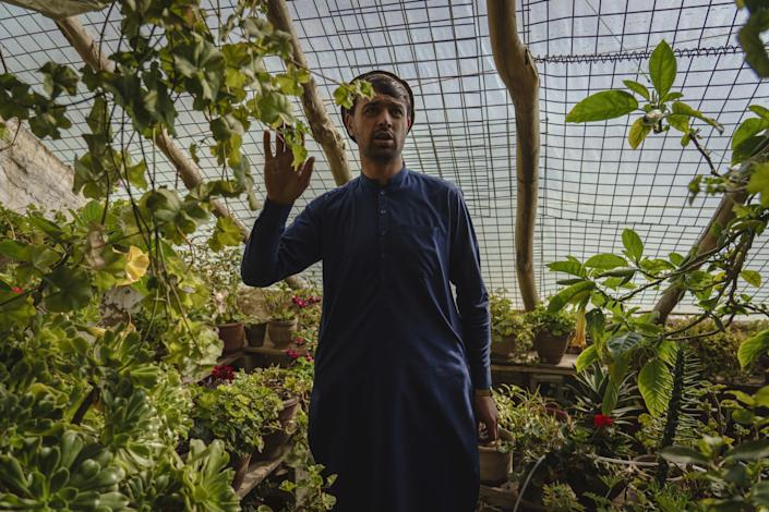 Sarda Wali, in Afghan garb, stands amid potted green plants; overhead is wire mesh held up by long tree limbs.