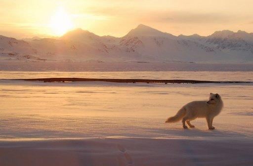 Arctic ice is considered vital for the planet as it reflects heat from the sun back into space