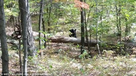 A photo taken by Darsh Patel of a black bear moving toward him, shortly before he was mauled to death in a heavily wooded area in northern New Jersey, September 2014.    REUTERS/West Milford Police Department