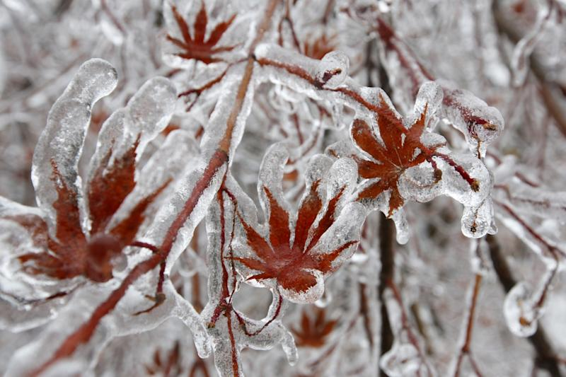 Canada Snow Storm: Toronto Coated in Ice, Power Cut to 475,000 [PHOTOS]