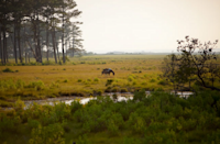 <p>Where: Maryland and Virginia</p><p>Just off the eastern shore of Maryland and Virginia is Assateague Island, half of which is under the domain of the National Park Service. You'll find Assateague State Park and the Assateague Island National Seashore in Maryland and Chincoteague National Wildlife Refuge in Virginia. While the beaches here are stunning and the Assateague Lighthouse is famous in its own right, it's the island's herds of feral horses that surprise visitors. Camping is extremely popular here and offers access to some of the most pristine seashore, marsh, and maritime forest on the East Coast.</p><p>Insider Tip: Birders can spy more than 300 species of resident and migratory birds on Assateague, from the American white pelican and great cormorant to the Eastern bluebird and wood thrush to Arctic terns and laughing gulls.</p><p><i>(Photo: Bill Crabtree, Jr. Virginia Tourism Corporation)</i></p>