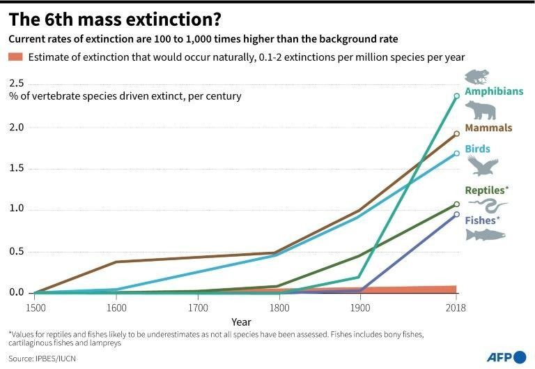 Graph showing the percentage of vertebrate groups driven to extinction since 1500 (AFP/Erin CONROY)