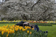 Two women take pictures as far fewer visitors than normal are seen at the world-famous Keukenhof garden in Lisse, Netherlands, Friday, April 9, 2021. Finally, after month after bleak month of lockdown, there are springtime shoots of hope emerging for a relaxation of coronavirus restrictions at a Dutch flower garden and other public venues. Keukenhof nestled in the pancake flat bulb fields between Amsterdam and The Hague opened its gates Friday to a lucky 5,000 people who were allowed in only if they could show proof on a smartphone app that they had just tested negative for COVID-19. (AP Photo/Peter Dejong)