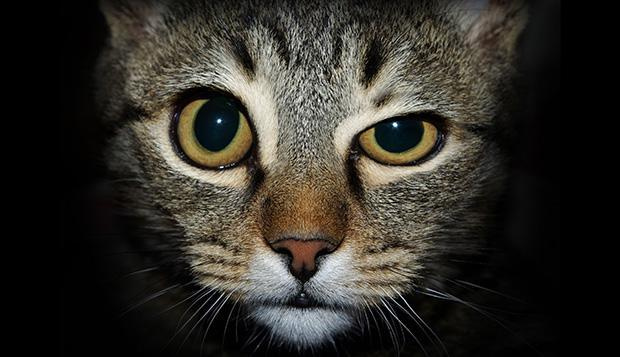 """<b class=""""credit"""">Alamy</b>Even this cat is skeptical."""