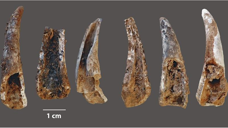 Neanderthals Enjoyed Seafood, Too, New Evidence Suggests