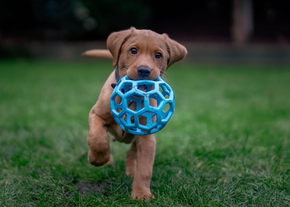 Prepare to tell your pup all about his past. (Photo: Getty Images)